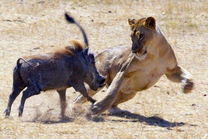7-Day Luxury Hakuna Matata Tanzania Safari