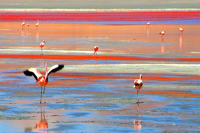Bolivia Salt Flats 3 Days 2 Nights Private Tour photo 3