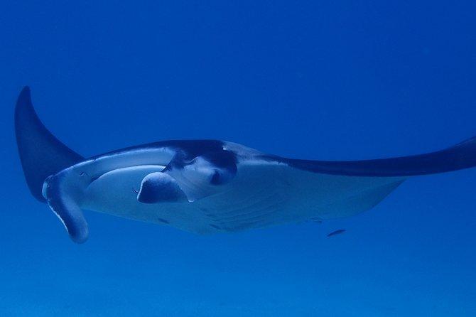 Introductory Dive Shared Boat Bora Bora