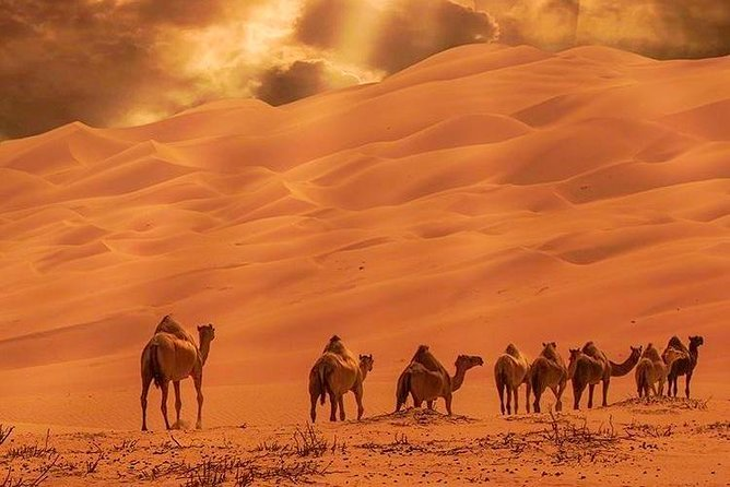 3 Days Desert Tour from Marrakech Overnight and camel hiking in Erg Chebbi