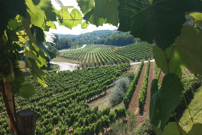 Wine Tour - The Best of Istria