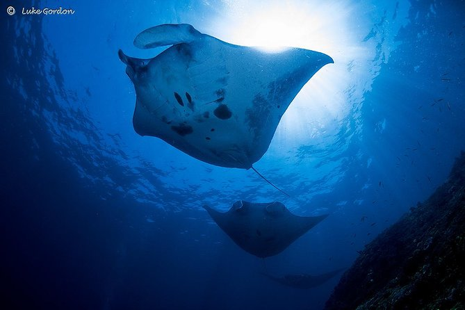Certified Manta Ray Diving at Nusa Penida from Padangbai