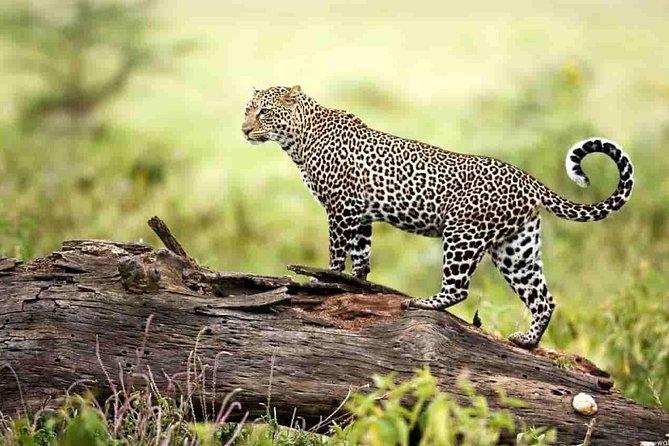 Tour To Mount Abu Wildlife Sanctuary with Skip-The-Line E-Tickets
