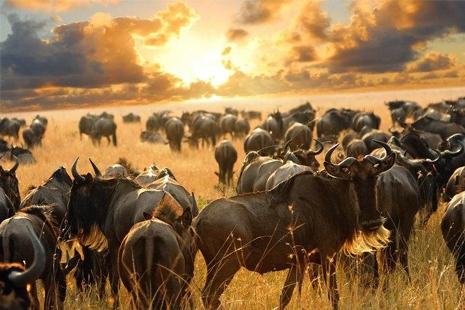 9 Days Kenya Safari Masai Mara, Lake Nakuru, Lake Naivasha, Amboseli, Tsavo