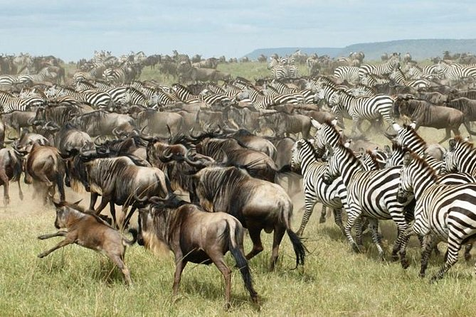 11 Days Best of Kenya and Tanzania Camping Safaris Adventure