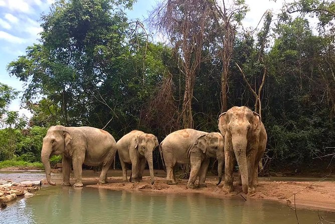 Elephant Sanctuary in Koh Samui