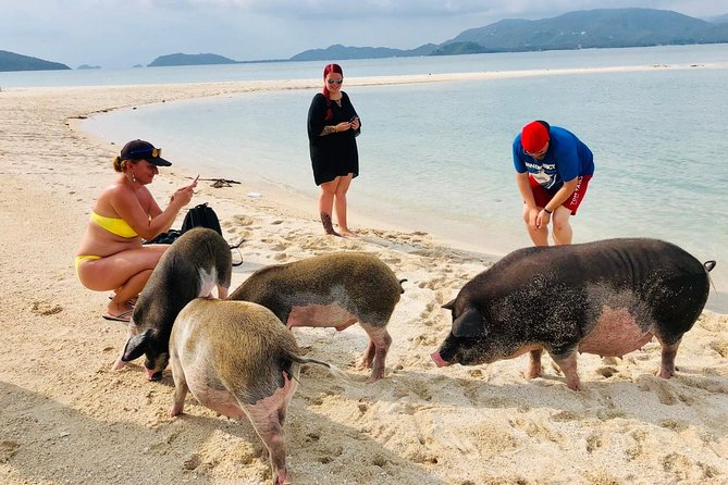 Pig Island Experience & Koh Tan by Speed Boat (Snorkeling, Relaxing, Sunset)