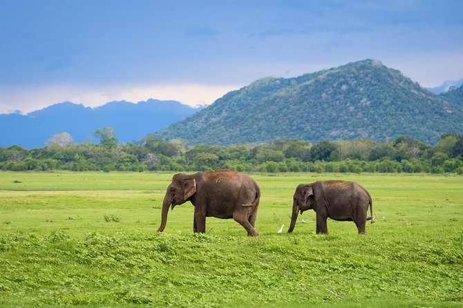 Glamping in Yala, Sri Lanka - A 2D/1N Guided Tour