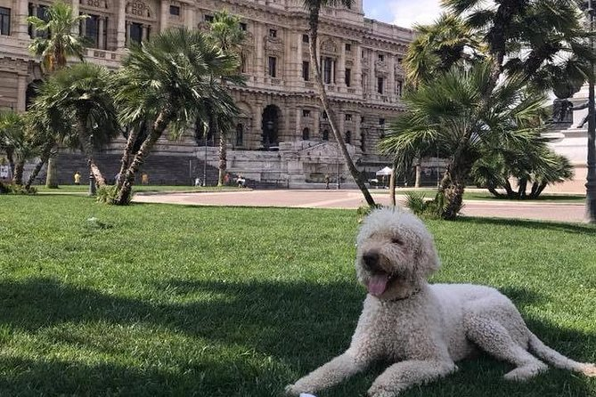 Rome like a golden doodle photo 3