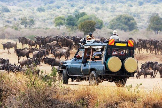 5 Days Kenya Safari Masai Mara, Lake Nakuru And Lake Baringo / Bogoria.