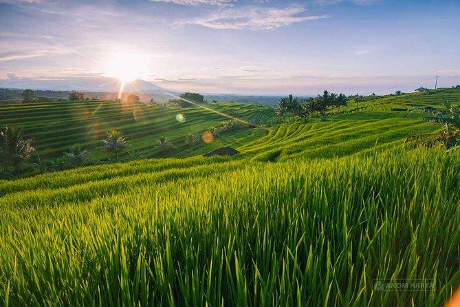 Unesco Heritage Jatiluwih Rice Field