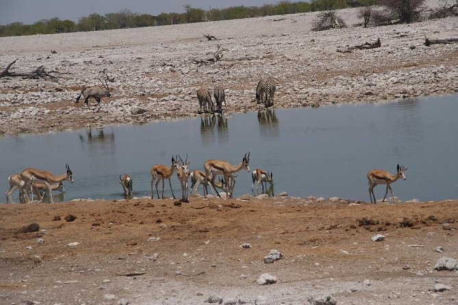 3 Day Etosha Guided Tour
