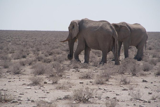 3 Day Etosha Self Drive Tour