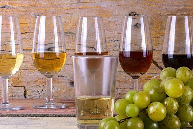 Wine and Tasting Tour Jerez De La Frontera