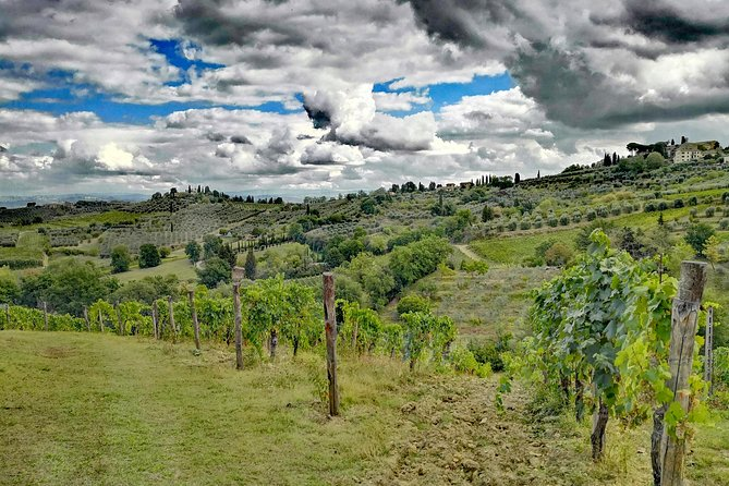 SAN GIMIGNANO and SIENA plus Lunch and Wine tasting TOURS FULL DAY photo 8