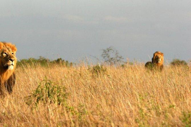 10 Days Wildebeest Migration Safari Package 2021