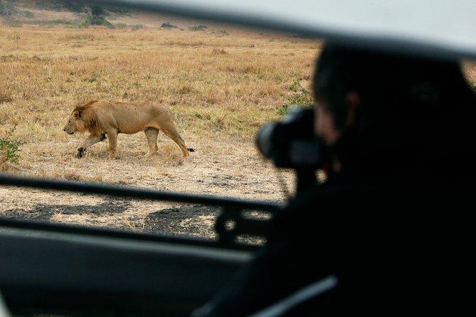 Tarangire National Park one day Wildlife safari