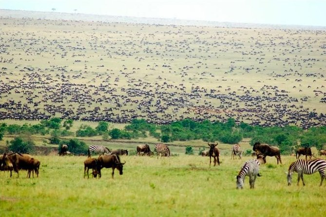 5 Days Masai Mara Wildebeest Migration Safari Packages 2020