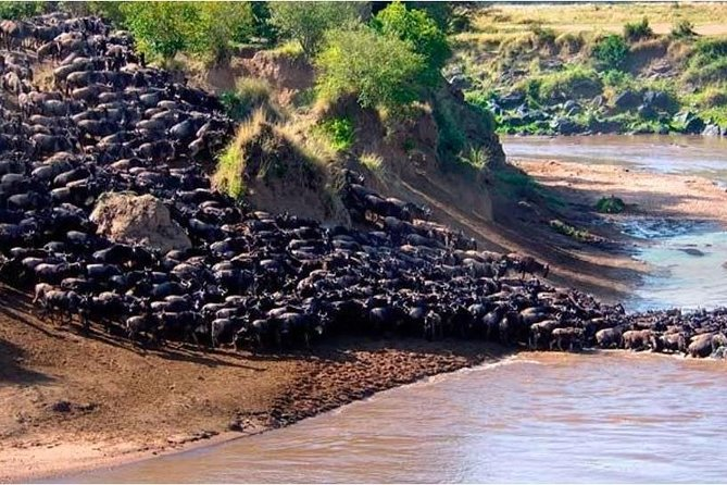 7 Days Maasai Mara Great Wildebeest Migration Tours 2020