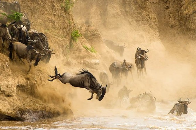 6 Days Great Masai Mara Wildebeest Migration Safari Holiday 2020