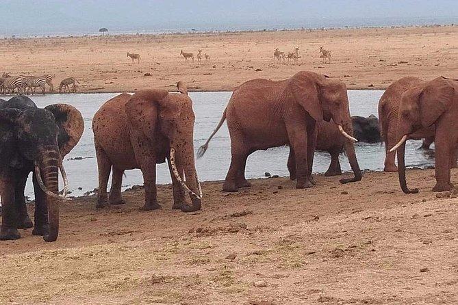 3 days safari Tsavo east and west