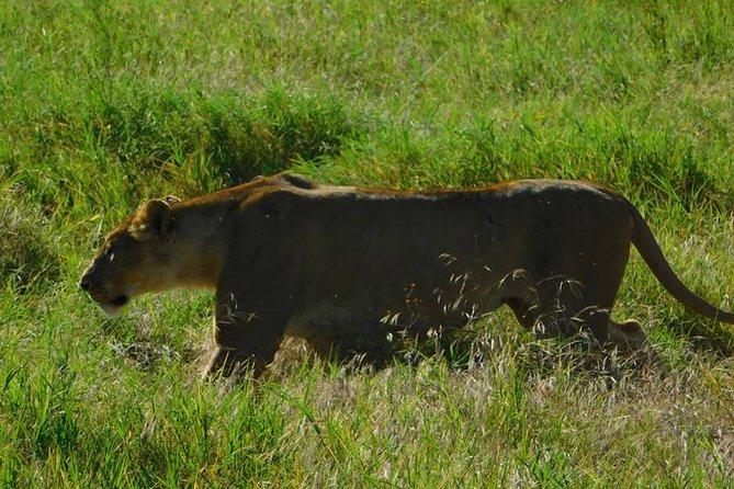 5 Days Wildlife safari