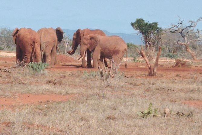 4 days Best of Kenya safaris (Tsavo east, Amboseli and Tsavo west.)