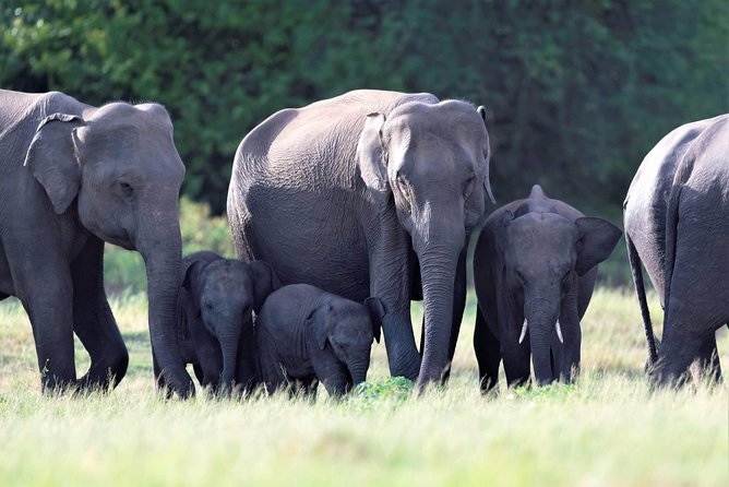 Skip the Line: Kaudulla National Park Entrance Ticket
