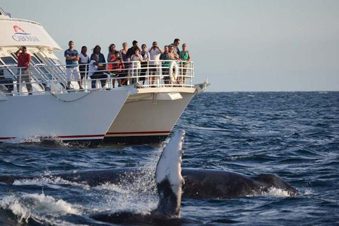 Whale Concert Discovery in Los Cabos