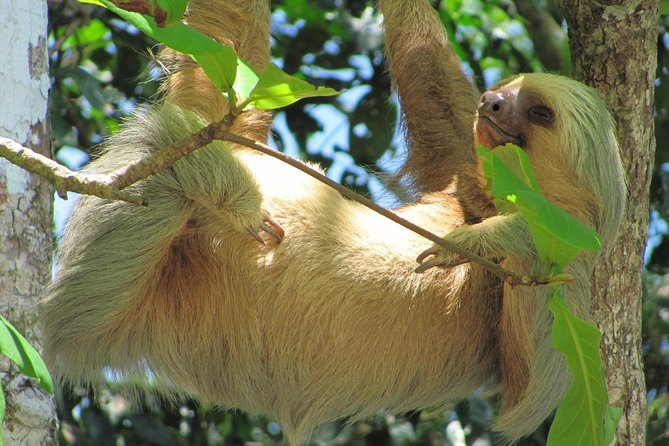 Arenal volcano, hanging bridges and sloth encounter tour.