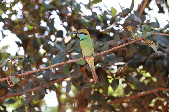 Wildlife Tour to Yala National Park Sri Lanka