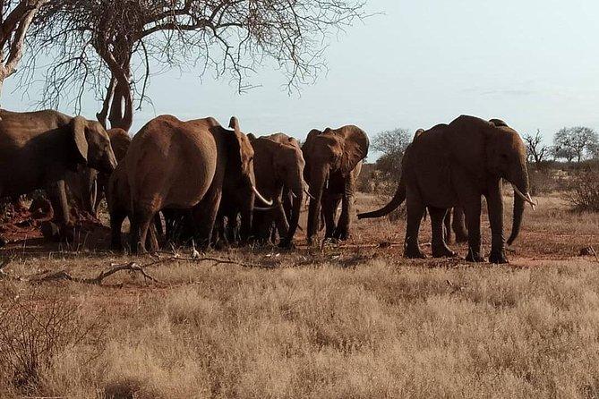 8 Days Safari Masai mara migration