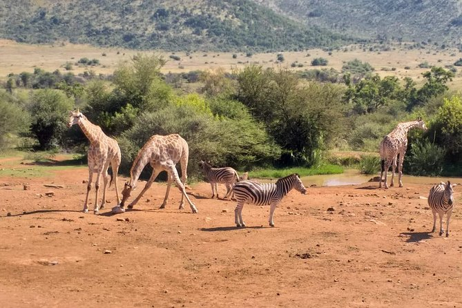 Pilanesberg and Sun City Tour photo 8