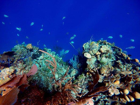 Roatan Barrier Reef Snorkel and Monkeys/Sloth Sanctuary
