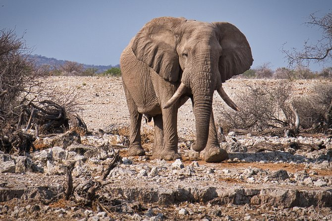 3 Day Etosha Wildlife Safari (Guided) Camping