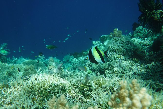 6 nights 12 dives full board transport from and to anywhere in Bali