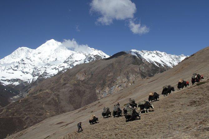 Off the beaten trail Laya Gasa trek 17days
