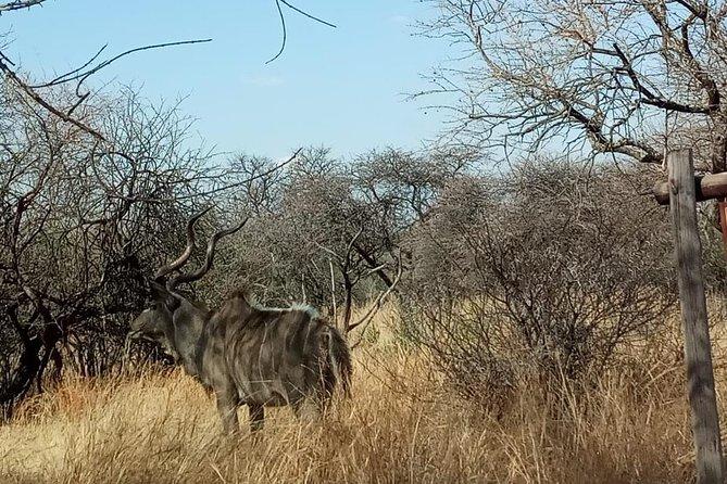 Pilanesberg Day Safari