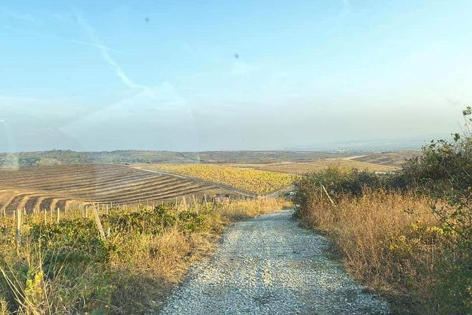 Wine tasting in lord mansions, nearby Bucharesti, the Romans wine road