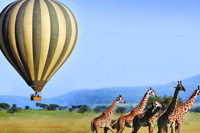5-days Ruaha Balloon Experience and Kitulo plateau National park