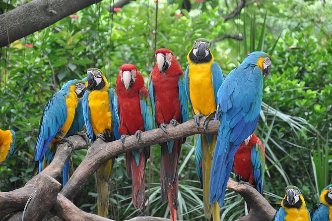 Day Tour to Admire the Panorama of Gulangyu Island and Visit the Precious Birds