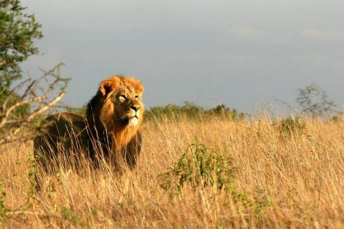 5 Days Kenya Safari in Tsavo East and West, Amboseli, and Taita Hills. photo 3
