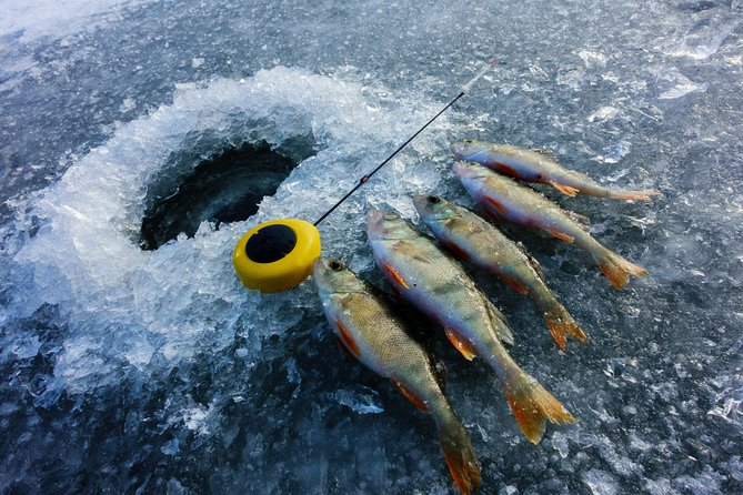 Nature Combo: Snowmobile Safari with Ice Fishing and Picnic
