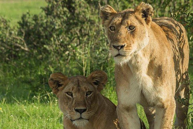 3 Days Tsavo National Park Safari in Kenya