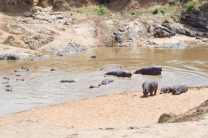 3 Days Kenya Safari in Maasai Mara National Reserve, Kenya