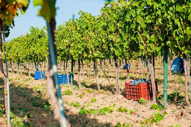 Wine Lovers Full-Day Wine Tour from Sofia photo 9