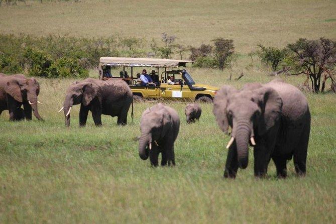 4 Days Masai Mara & Lake Nakuru Lodge Private Tour Min 2 Pax