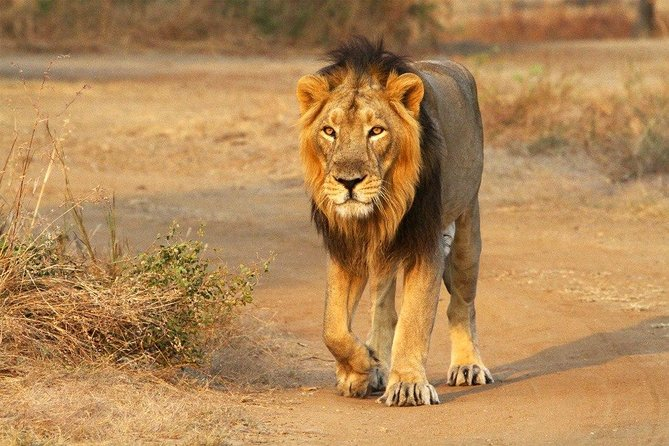 Holiday at Gir Forest