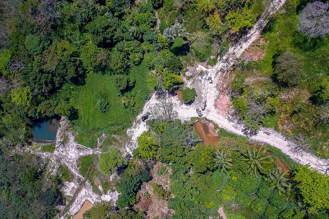 30 acres of lush, tropical land for elephants to roam around and explore.