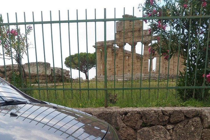 Paestum Greek Roman Temples + Buffalo Mozzarella + Wine Tasting in Cilento Nat.Park!